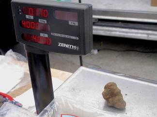 Price of this white truffle - 40 Eur