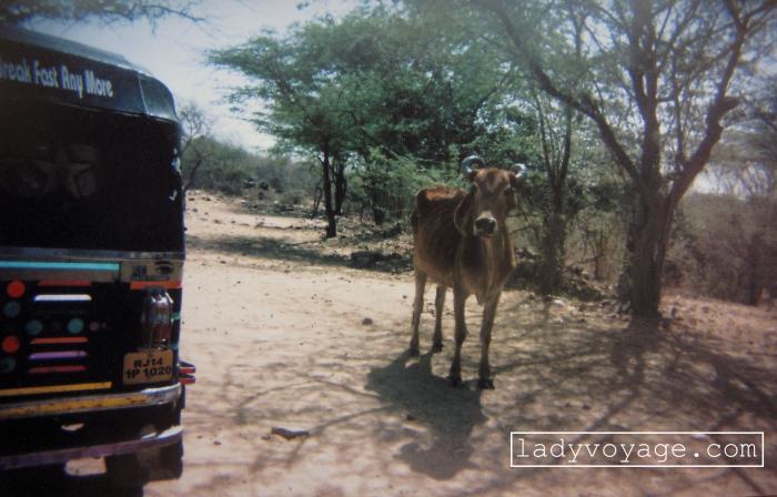 Tuk tuk & Cow, Jaipur, India. Made with single-use camera. India
