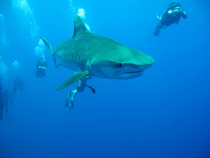 Free diving with sharks. Photo borrowed from Afridive.com